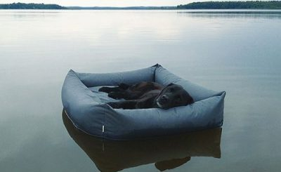 best waterproof dog bed